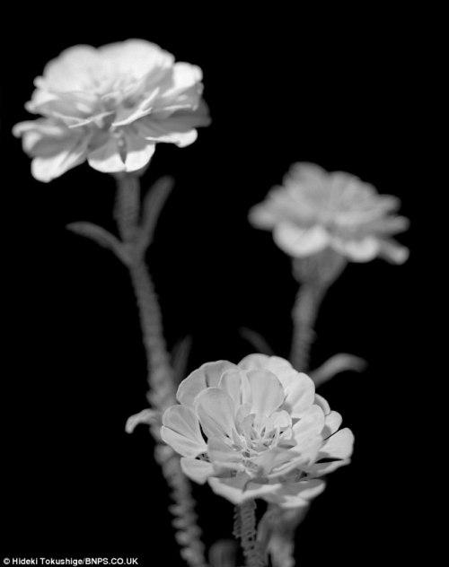 Hideki Tokushige Bone Flowers