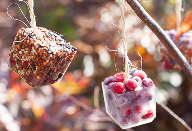 Bird Feeder Frozen Ornaments from Henry Happened