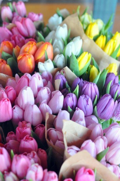 Pastel Tulips