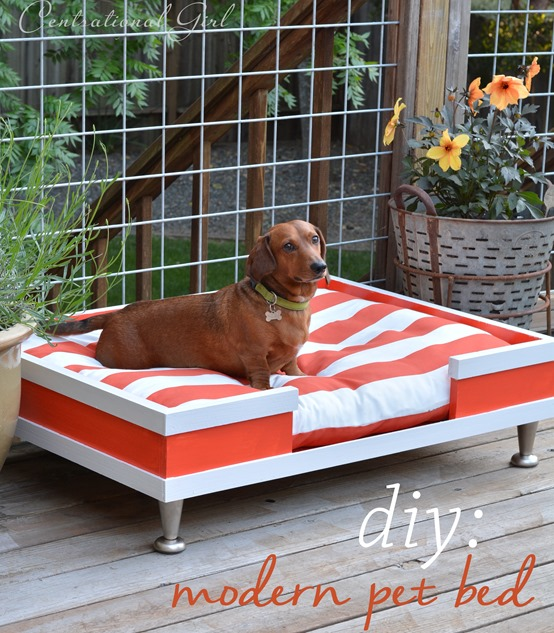 diy-modern-pet-bed