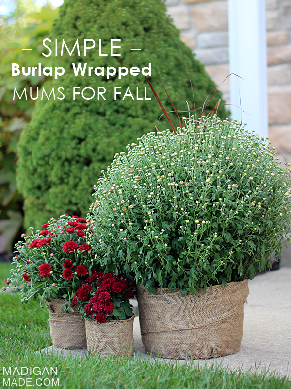 http://mjtrim.files.wordpress.com/2014/09/simple-burlap-wrapped-mums-for-fall-0_zpseca4e715.png?w=620